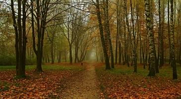 Златна есен.