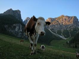 Шоколад и мляко от Инсбрук, Австрия