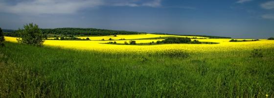 На полянката зелена в жълто оцветена....