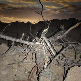 Дърво без корен!