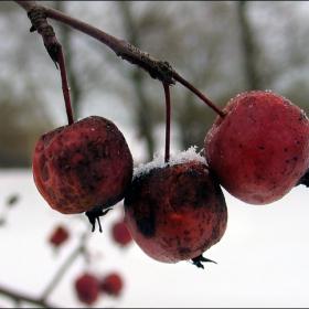 Winter natura 3