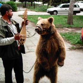 Gipsy And Bear
