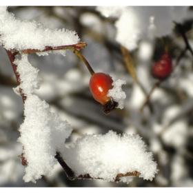 Приказка за зимата V