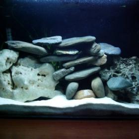 Ново Обзавеждане на аквариума ми :)