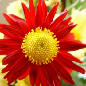 Есенно цвете 1