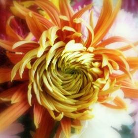 Есенно цвете 3