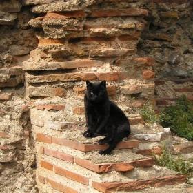 Дебела гръцка котка