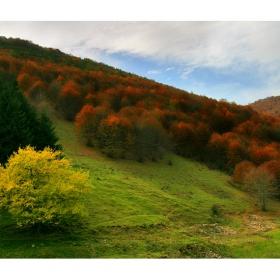 Есен във Врачанския Балкан