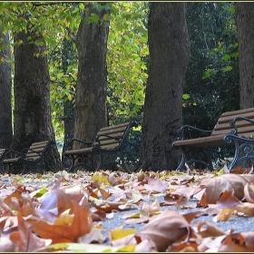 Самотна есен