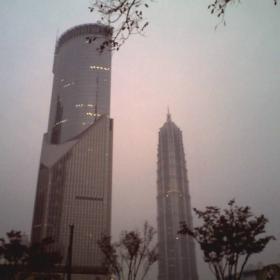 shanghai daylight (gsm)