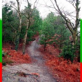 България е навсякъде, даже в Английските гори!