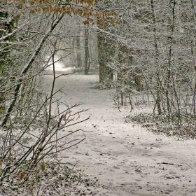 Зимата и парка