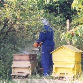 На пчелина