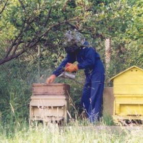 На пчелина_2
