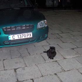 Котка пазач :)