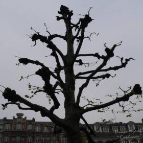 ... a tree