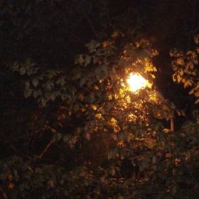пролетна вечер 2