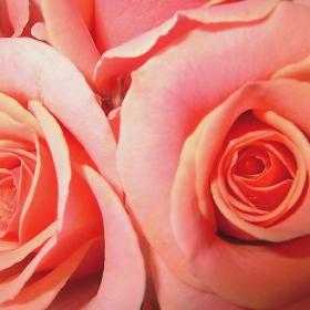 Розов свят.