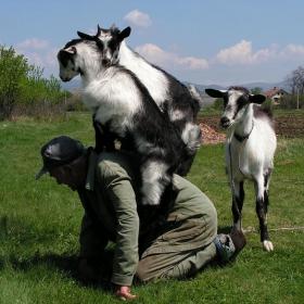 Селска идилия!!!