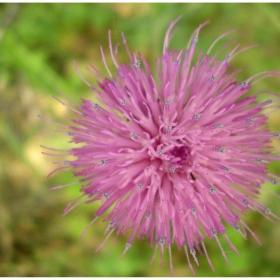 пипала-то цвете:P