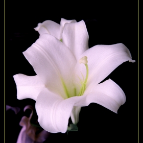 Орхидея, може би...