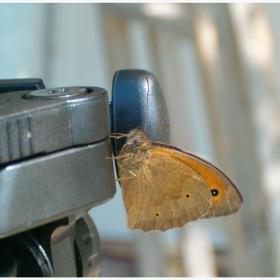 Пеперуда фотограф