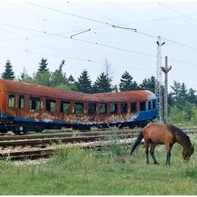 Кон трева пасе... на железопътната гара