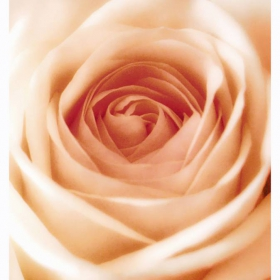 Розов цвят...