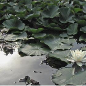 Water Beauty 2