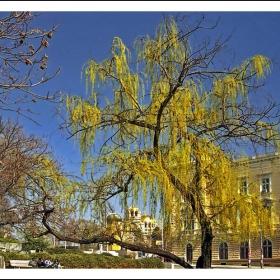 Златни кубета и златни дървета