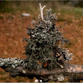 Паразит в дърво забит