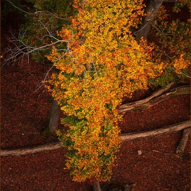 ..AutumnColors..