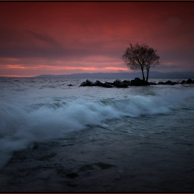 .. the Dead of the Wave ..