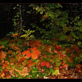 Пъстър хоровод от есенни листа