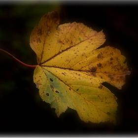 Все още има сили да се бори със вятъра и с есента