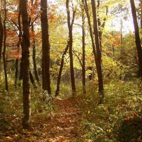 Есенна пътека