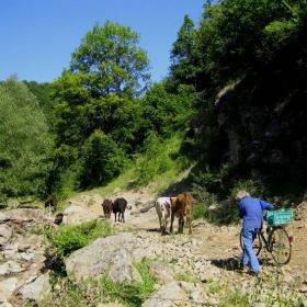 пастирът с колелото