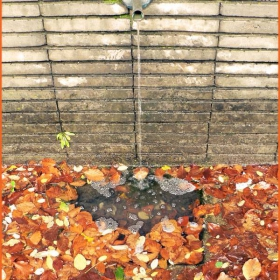 есенна вода