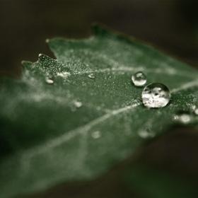 Nature tears