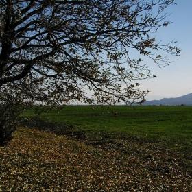 Дърветата имат златно минало, планините-бяло бъдеще.Нашата малка тревожна земя търси своето продължение....