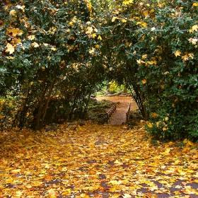 есенна Варна 5