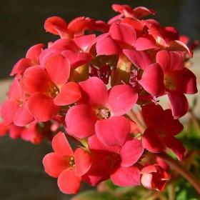 едно непретенциозно цвете