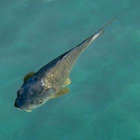 Рибка някаква