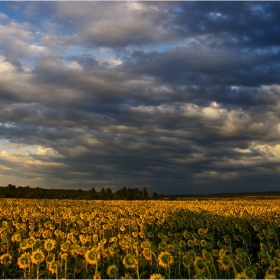 Смръщи се Небето... и хилядите малки слънчица наведоха глави смутено...