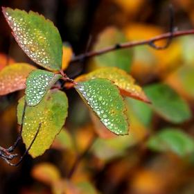 Есенни листа - зимата не идва...