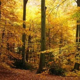Цвят на есен