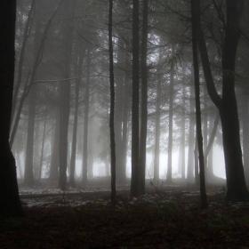 Зъзнещи капки притихват в прегръдките на мъглата...