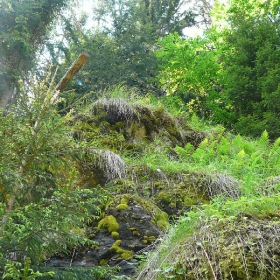 "Родопи, около яз. ""Доспат"", близо до река ""Бистрице"""
