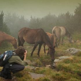 Няма нищо по-хубаво от лошото време...за любителите на планински коне;)