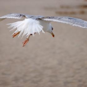 На крилата на свободата